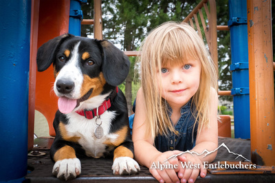 Entlebucher Mountain Dog with child