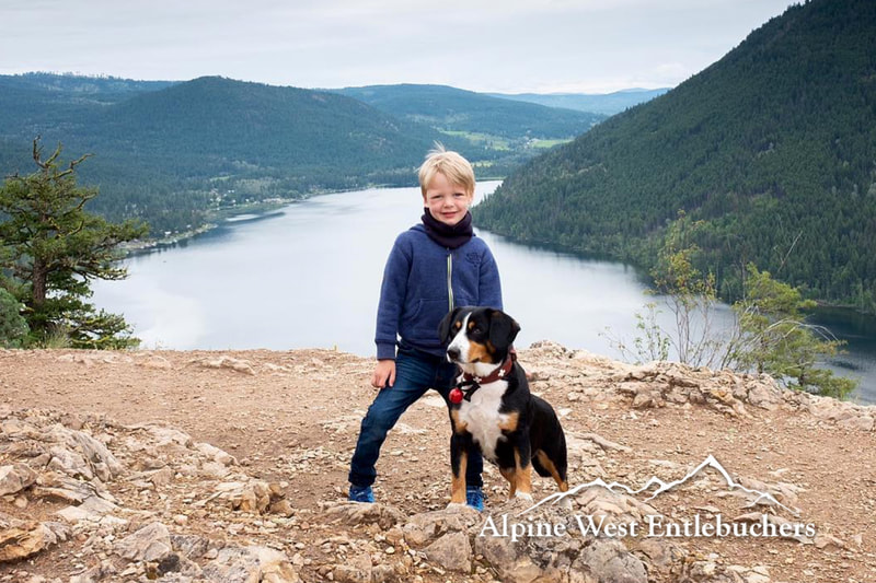 mountain dog with children